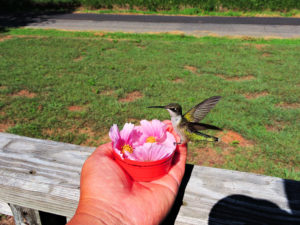 HummingBirds are Very Friendly