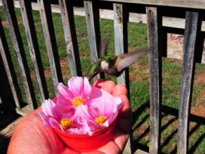 HummingBirds are Very Friendly